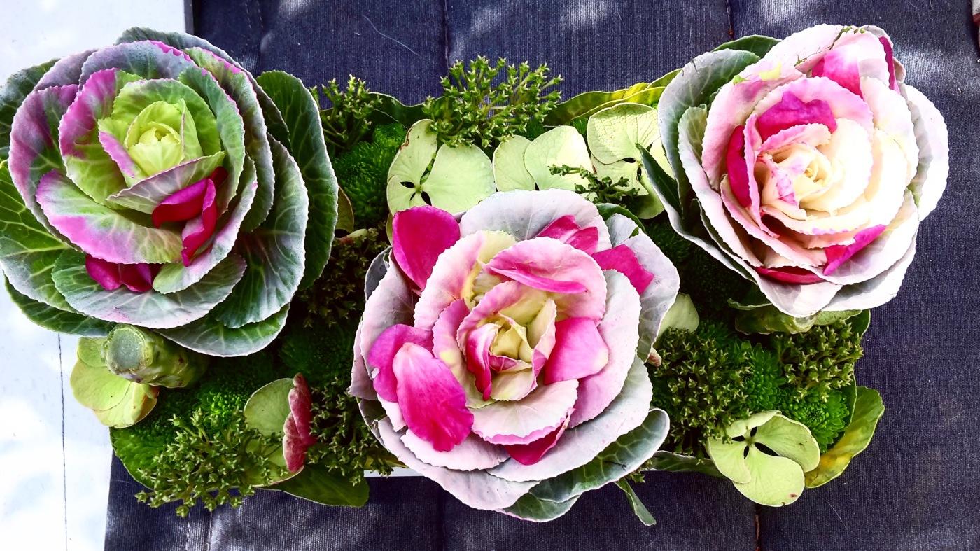 c'est ainsi que l'on naît, dans les choux et les roses… 🌸 – la